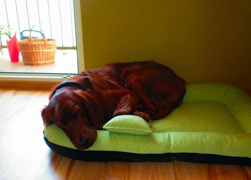 dobre legowisko dla dużego psa